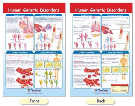 W94 4637 human genetic disorders bulletin board chart