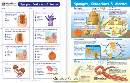 W94 4719 Sponges Cnidarians Worms Visual Learning Guide