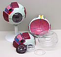 Human Eye 6X Model
