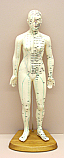 Human Female Acupuncture 48 cm