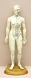 Human Female Acupuncture 48 cm