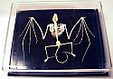Bat Skeleton Real Educational