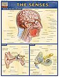 Human Senses Chart