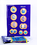 Mitosis Model Activity Set
