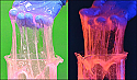 Fluorescent Slime Using Polyvinyl Alcohol