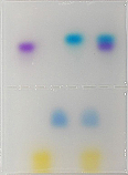 Electrophoresis: Agarose Gel Separation of Dyes