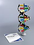 DNA 3D Activity Model