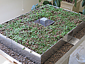 Assemble & Learn Green Roof Model
