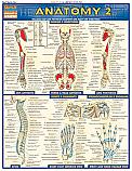 Anatomy 2 Advanced Chart