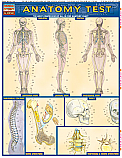 Anatomy Test Chart