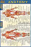 Anatomy Chart Compact