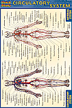 Circulatory System Chart Compact