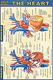 Heart Chart Compact