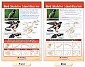 Bird Skeleton Identification Bulletin Board Chart