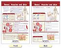Bones, Muscles & Skin Bulletin Board Chart