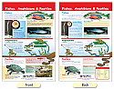 Fishes, Amphibians & Reptiles Bulletin Board Chart