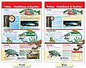 Fishes, Amphibians & Reptiles Bulletin Board Chart