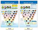 Diversity of Life Bulletin Board Chart