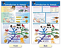 Introduction to Animals Bulletin Board Chart