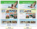 Mammals & Birds Bulletin Board Chart