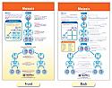 Meiosis Bulletin Board Chart