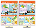 Microlife - Bacteria, Fungi & Protists Bulletin Board Chart