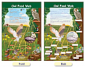 Owl Food Web Bulletin Board Chart