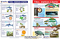 Fishes, Amphibians & Reptiles Visual Learning Guide