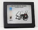 Black Widow Spider Riker Mount