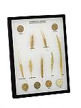 Commercial Grains Riker Mount