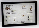 Arachnids Spiders Riker Mount