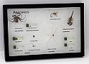 Arachnids Spiders Riker Mount