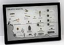 Aquatic Insects Riker Mount