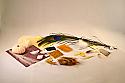 Animal Coverings Microscopy Kit