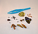 Insects Microscopy Kit