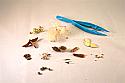 Seeds That Travel Microscopy Kit