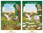Owl Food Web Bulletin Board Chart