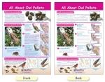 Owl Pellets Bulletin Board Chart