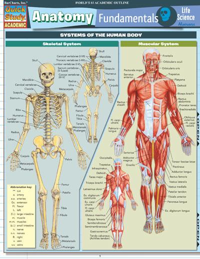 8100 20 Anatomy Fundamentals Human Life Science Chart