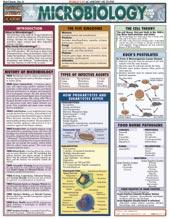 8105-4 Microbiology Chart